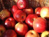 Basket of organic apples.